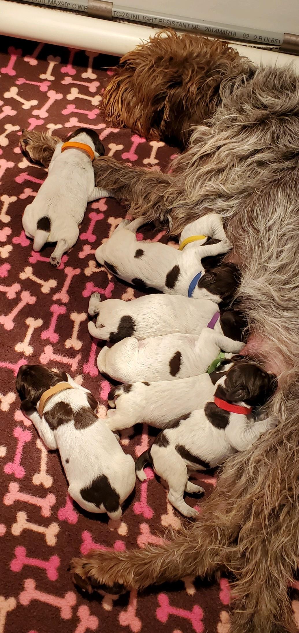Eton & Bucket Pups-1